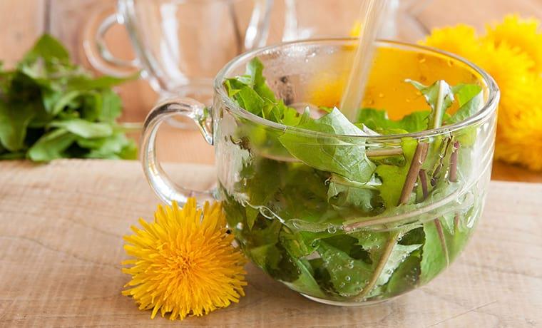 рецепт чая из листьев одуванчика